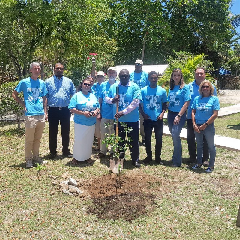 National Trust Cayman Arbour Day